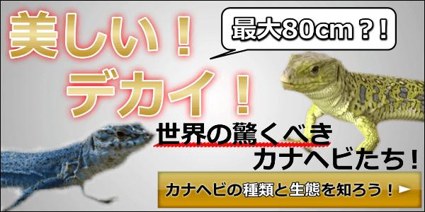 方 カナヘビ 捕まえ カナヘビとは?飼育方法や寿命を紹介!噛むことはある?